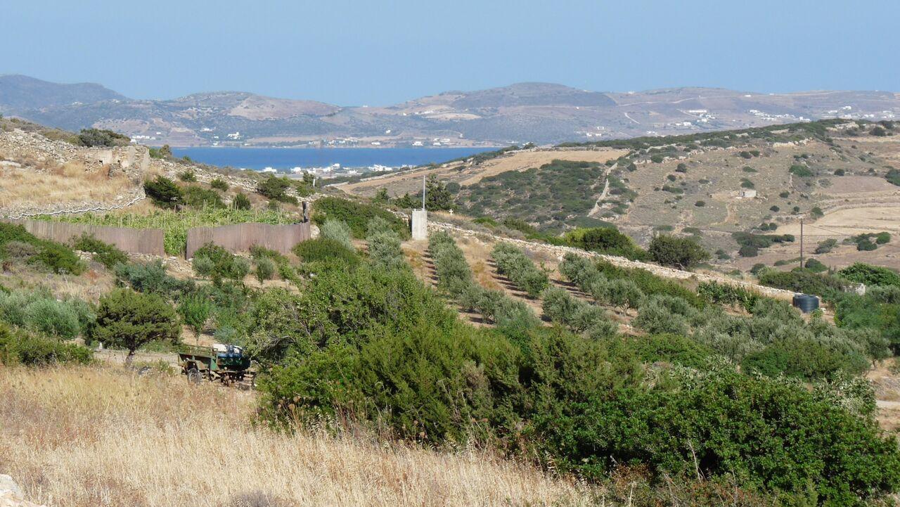 Kamarantho Organic Farm on Paros Greece