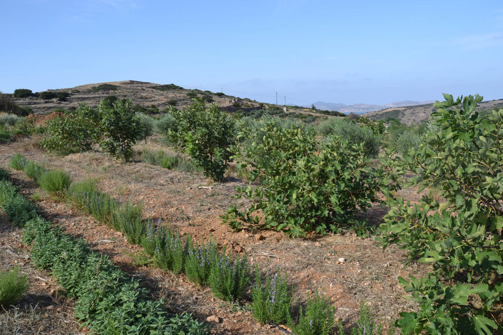 polyculture