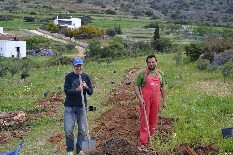 Planting pomegranate trees