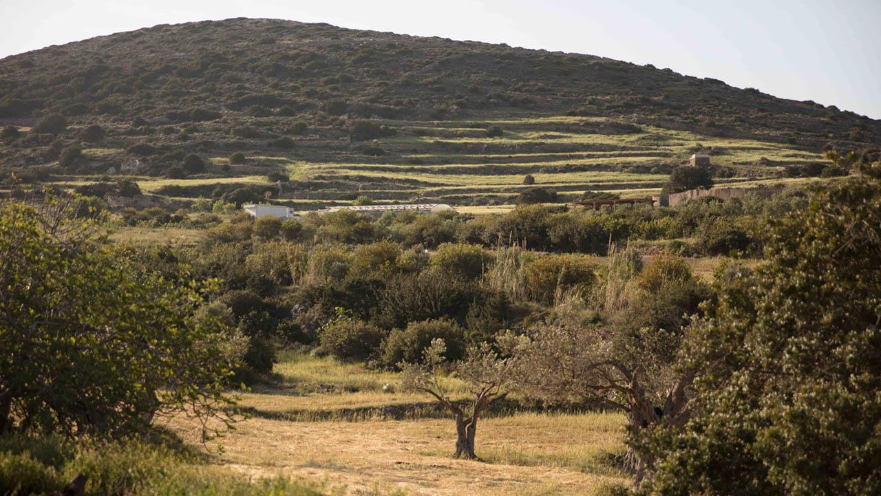 Βιολογικό αγρόκτημα Καμάρανθο στην Πάρο
