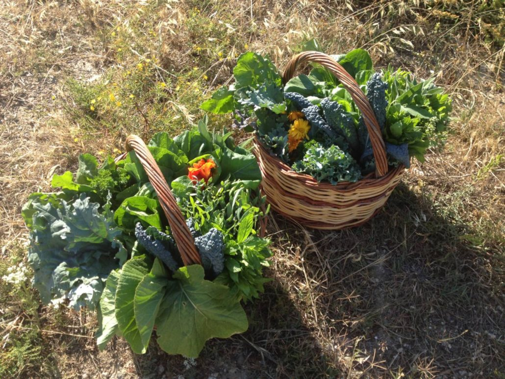 organic vegetables at our farm on Paros