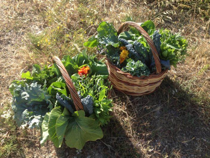 2017: Μια μικρή παραγωγή ιδιαίτερων λαχανικών