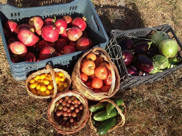 Φρέσκα Βιολογικά Φρούτα & Λαχανικά Πάρου